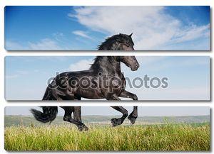 Красивый черный конь работает Галоп