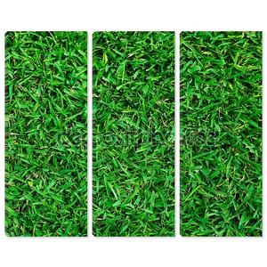 зеленая структура травы