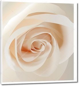 Белая  нежная роза крупным планом
