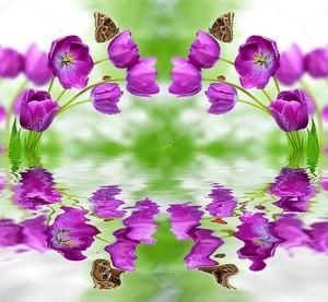 Зеркальные фиолетовые тюльпаны и их отражение в воде