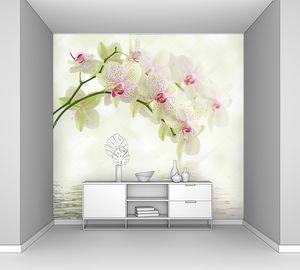 Белая Орхидея на светлом фоне