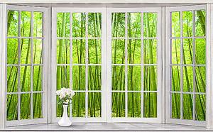 Бамбук в окне