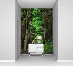 Мечтательными пейзажами в лесу