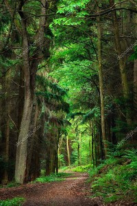 Тропа в  изумрудном лесу