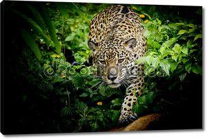 закройте портрет ягуара