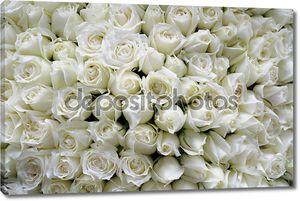 Белые розы фон