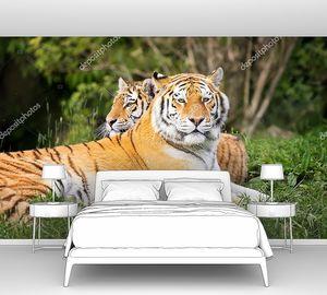 Тигр и тигрица