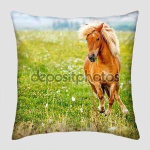 Small pony horse (Equus ferus caballus)