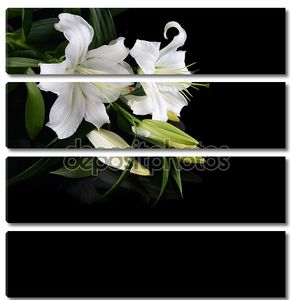 Лилии на черном фоне