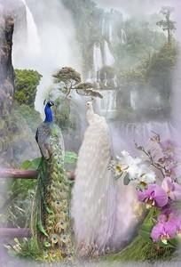 Два павлина у водопада