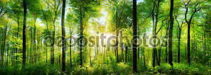 Панорама лес с лучами солнечного света
