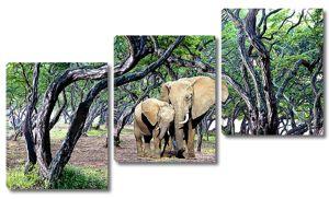 Слоны среди деревьев