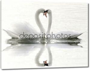 Лебеди на озере и их отражение