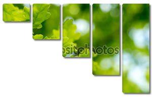 Зеленые листья дуба фон