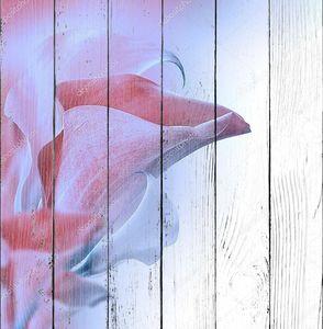 Нежные розовые бутоны