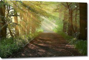 Прекрасное утро в лесу