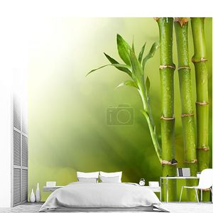 Бамбук крупным планом