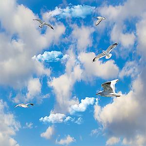 Парящие чайки