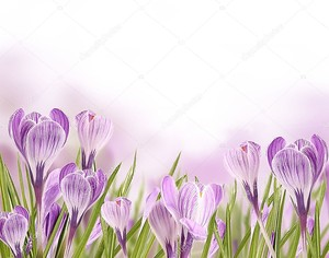 Весенние луговые