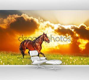 Скипы залив лошади на лугу против закат