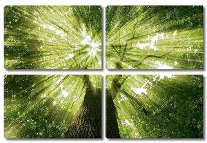 Лесные кроны снизу