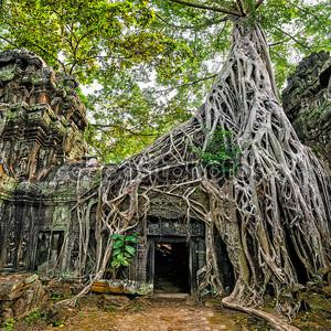 TA prohm храм с гигантских Баньян в Ангкор Ват комплекс, Сием Рип, Камбоджа