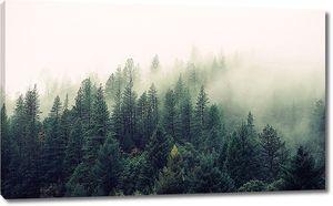 Туман по верхушкам елей