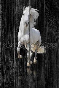 белая лошадь изолирована