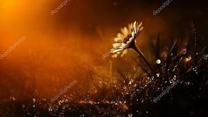 Удивительные белые Дикий цветок в закат после дождя