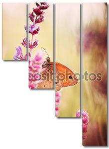 Бабочка на высоких стеблях