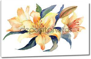Цветы желтые лилии