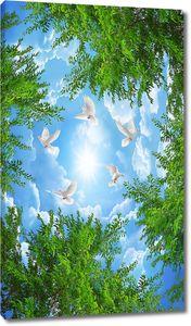 Небо в вершинах деревьев