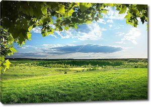 поле весенней травы и лес