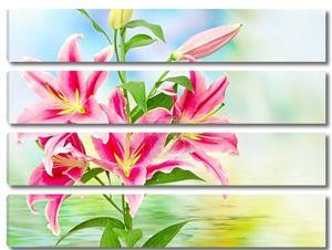 Рисунок розовых лилий