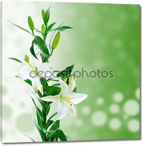 Белые лилии на зеленом фоне