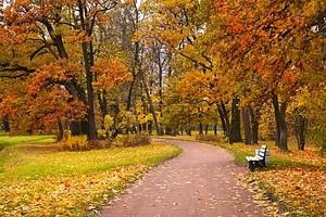 Аллея усыпанная листьями