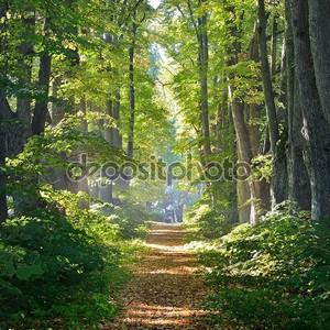 Дорога в красивом лесу