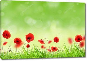 Цветы мака в траве с солнечными бликами