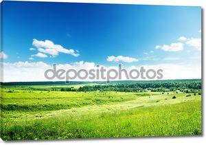 Поле лета травы и цветы