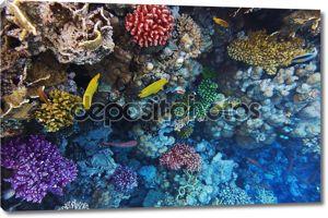 Кораллы и рыбы в красной Sea.Masked бабочка.Египет