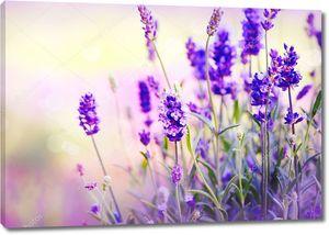 Лавандовые цветки