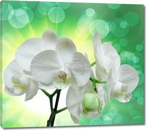 Цветок орхидеи