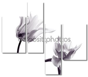 Тюльпан силуэты на белом