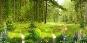 Тропинка в лесу
