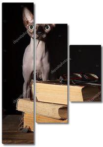 Сфинкс кошка и книги