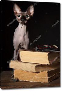 Сфинкс кошки и книги