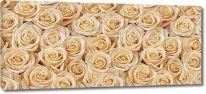 Ковер из кремовых роз