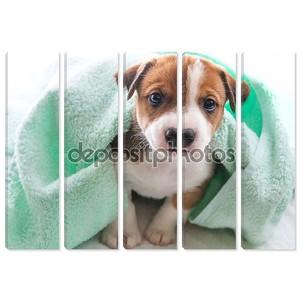 Собака банное полотенце