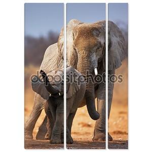 ребенок слона