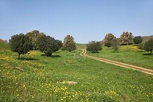 марта в полдень, сельская дорога